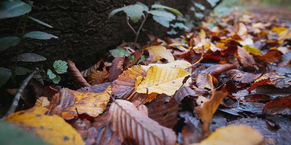 Comment se débarrasser des feuilles dans votre jardin ?