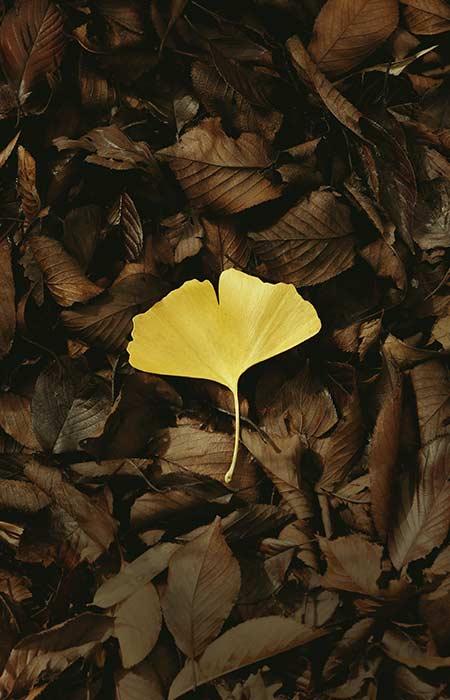 feuilles mortes jardin